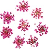 Homely AriesLibra 10pcs Star Cluster Flower 3D Nail Art Dried Flower Real Preserved Flowers Decoration Manicure Nail Decal Accessories : peach