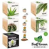 Ecocube Exotics-Set Mit 5 Sorten - 25% Sparen Im Paket, Pflanzen Im Holzwürfel, Nachhaltige Geschenkidee, Grow Your Own/Anzuchtset, Made In Austria