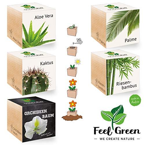 Feel Green 296862