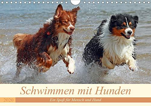 Schwimmen mit Hunden - Ein Spaß für Mensch und Hund (Wandkalender 2020 DIN A4 quer): Hunde beim Tollen im Wasser - es macht einfach Spaß ihnen zuzusehen. (Monatskalender, 14 Seiten ) (CALVENDO Tiere)