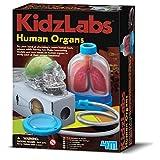 4M 68482 - KidzLabs, Human Organs hergestellt von 4M