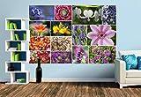 Premium Foto-Tapete Staudenblumen Collage (verschiedene Größen) (Size M | 279 x 186 cm) Design-Tapete, Vlies-Tapete, Wand-Tapete, Wand-Dekoration, Photo-Tapete, Markenqualität von ERFURT