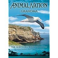 Animal Nation - Grandma - Northern Royal Albatross