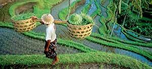 Hasbro - MB Puzzles - Puzzle 1000 Pièces Panoramique Géo - Vue sur rizières - Indonésie