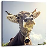 Lustiges Portrait einer Kuh, Format: 60x60 auf Leinwand, XXL riesige Bilder fertig gerahmt mit Keilrahmen, Kunstdruck auf Wandbild mit Rahmen, günstiger als Gemälde oder Ölbild, kein Poster oder Plakat
