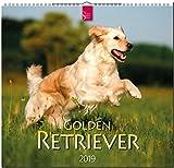 MF-Kalender GOLDEN RETRIEVER 2019