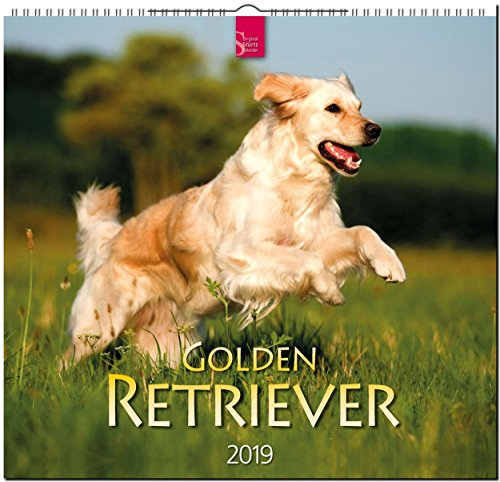 MF-Kalender GOLDEN RETRIEVER 2019