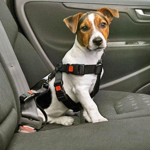 hundeinfo24.de Hundegeschirr Auto-Sicherheitsgurt, Autosicherheitsgeschirr – Schwarz – XS – XL