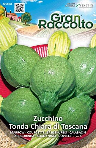 Hortus 56ZUC6356 Gran Raccolto Zucchino Chiara Toscana, Tondo, 13x0.4x20 cm