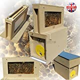 Beekeepers colmena de abejas para observación