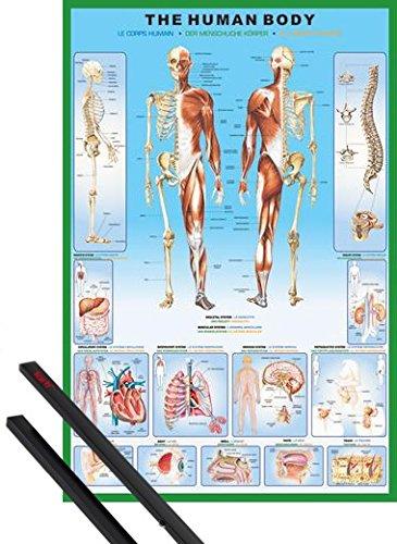 poster-soporte-el-cuerpo-humano-poster-91x61-cm-anatomia-y-1-lote-de-2-varillas-negras-1art1r