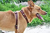 moonpet Premium Soft echt Leder Hundegeschirr–keine Pull Verstellbare Leder Halfter Gurt Weste–robust für mittlere Große Hunde