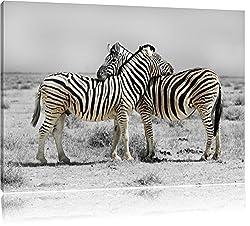 Zebras in der Savanne schwarz/weiß Format: 80x60 auf Leinwand, XXL riesige Bilder fertig gerahmt mit Keilrahmen, Kunstdruck auf Wandbild mit Rahmen, günstiger als Gemälde oder Ölbild, kein Poster oder Plakat