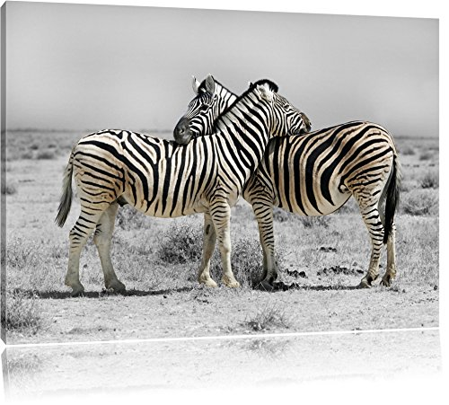 Zebras in der Savanne schwarz/weiß Format: 100x70 auf Leinwand, XXL riesige Bilder fertig gerahmt...