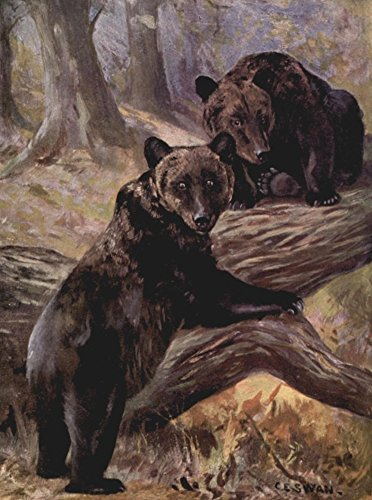 Cuthbert E. Swan - Wild Beasts of The World 1909 Brown Bears Kunstdruck (45,72 x 60,96 cm)