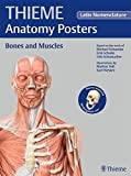 THIEME Anatomy Posters Bones and Muscles, Latin Nomeclature