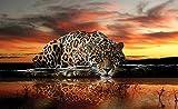 REINDERS Leopard - Fototapete 368 x 254 cm