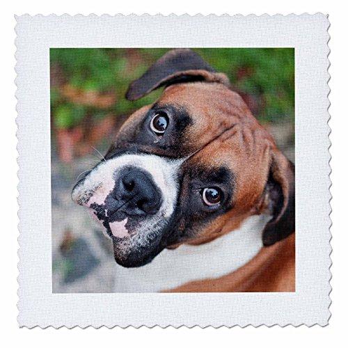 g Portrait Hunde-, Quilt, Platz, 8von 8Zoll (QS _ 155019_ 3) (Quilt Square Hund)
