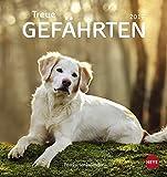 Hunde Postkartenkalender - Treue Gefährten - Kalender 2019
