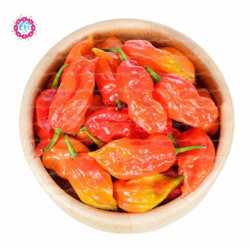 100 pcs/sac Pepper, Carolina Graines de piment Reaper - Super Hot Graines Légumes 100% Véritable maison Garend Cache-pot