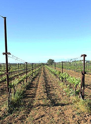 Mesimvria-Wines-Rotwein-Cabernet-Sauvignon-Merlot-2013-trocken-1x-750-ml