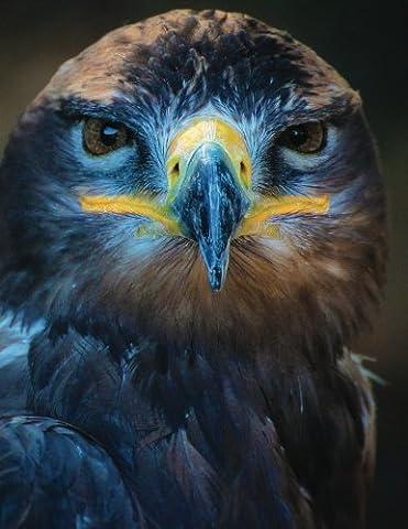 Hawk Eyed Blank Sketchbook: Art Sketch Pad Notebook (Wildlife150 Sketch)