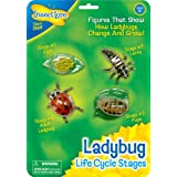 Insect Lore 48127 - Ladybird Life Cycle Stages, Lernspielzeug