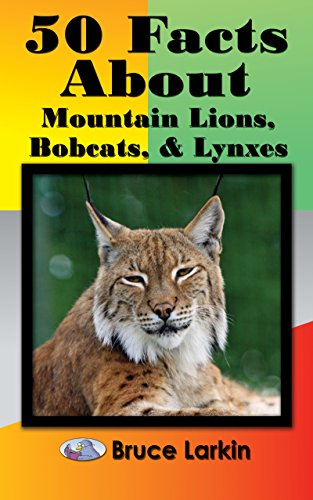 50 Facts About Mountain Lions, Bobcats & Lynxes (English Edition) - Bobcat Lynx