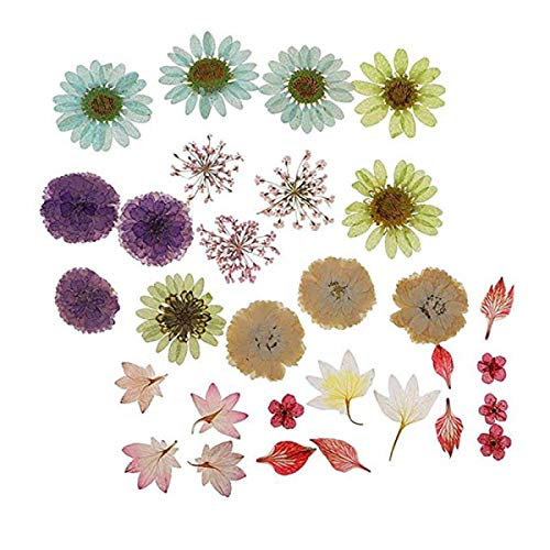 WOOAI 1 Juego de Hermosas Flores secas prensadas Naturales, Hojas prensadas para álbumes de Recortes, Manualidades, Resina epoxi, Accesorio para Hacer Joyas, As Show, Talla única