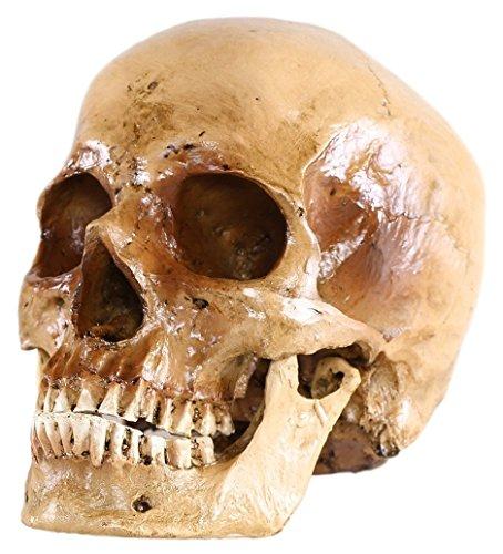 r Schädel, antikes Finish (Schädel)
