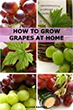 How to Grow Grapes at Home: Dummies Guide to Growing Grapes from Seeds and Cuttings