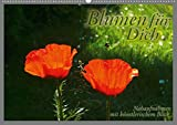Blumen für Dich (Posterbuch DIN A2 quer): Stimmungsmacher Blumen (Posterbuch, 14 Seiten) (CALVENDO Natur) [Taschenbuch] [Feb 17, 2013] Helwig, Adalbert
