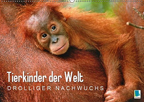 Tierkinder der Welt: Drolliger Nachwuchs (Wandkalender 2019 DIN A2 quer): Tierbabys: Abenteuerliche Welt der Kleinen (Monatskalender, 14 Seiten ) (CALVENDO Tiere)