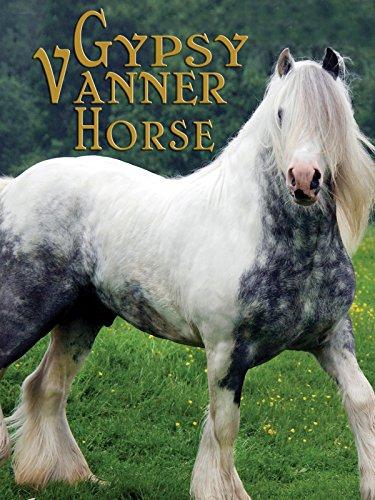 gypsy-vanner-horse