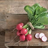 Celesta ORGANIC Radish Seeds (Raphanus sativus) 50+ Rare Seeds + FREE Bonus 6 Variety Seed Pack - a $29.95 Value! Packed in FROZEN SEED CAPSULES for Growing Seeds Now or Saving Seeds For Years