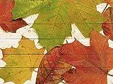 Artland Wand-Bild weiß lasiert Holz-Bild digital Bedruckt mit Motiv Jule Herbstfarben Botanik Blätter Fotografie Bunt 60 x 80 x 4,2 cm A5HK