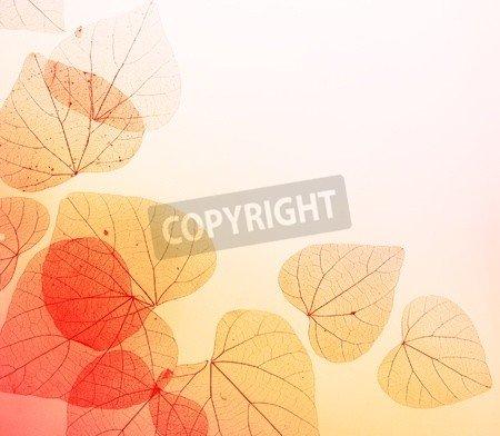 "Poster-Bild 80 x 70 cm: ""Floral Border with Autumn Orange and Red Leaves"", Bild auf Poster"