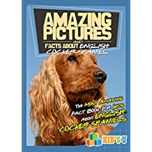 Amazing Pictures and Facts About English Cocker Spaniels: The Most Amazing Fact Book for Kids About English Cocker Spaniels  (Kid's U) (English Edition)