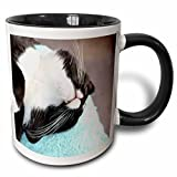 3dRose Sleeping Tuxedo Cat-Two Tone Mug, Ceramic, Black, 10.16 x 7.62 x 9.52 cm