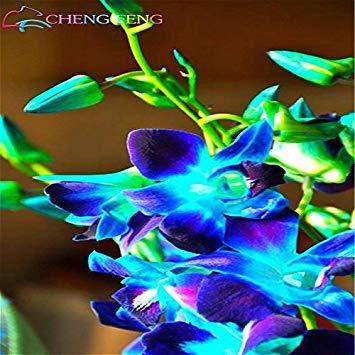 Graines chinoises bon marché Dendrobium 100 Pcs un sac en pot SeedsAndPlants Fleur Bonsai Seed Orchid Rare Couleurs mélangées Balcon Pots de fleurs Jardinière