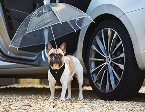 Transparenter Hundeschirm / Pet Umbrella, COUTUDI Haustierregen Zubehör mit Ultra Stark Eingebauter Leine Ideal für Welpen von 20 Zoll Zurück (Welpen Zubehör)