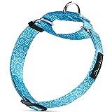 Dazzber Martingal Halsbänder für Hunde, Einstellbar-Heavy Duty- Weiche-Glatte-Leichtes Gehen Sie den Hund für Große/Klein Hunde (Groß, HimmelBlau)