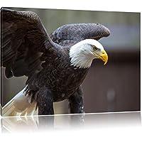 Kunstdruck auf Wandbild mit Rahmen Adler Format: 60x40 cm auf Leinwand kein Poster oder Plakat XXL riesige Bilder fertig gerahmt mit Keilrahmen günstiger als Gemälde oder Ölbild