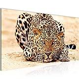 Bilder Afrika Leopard Wandbild Vlies - Leinwand Bild XXL Format Wandbilder Wohnzimmer Wohnung Deko Kunstdrucke Gelb Grau 1 Teilig -100% MADE IN GERMANY - Fertig zum Aufhängen 000312b