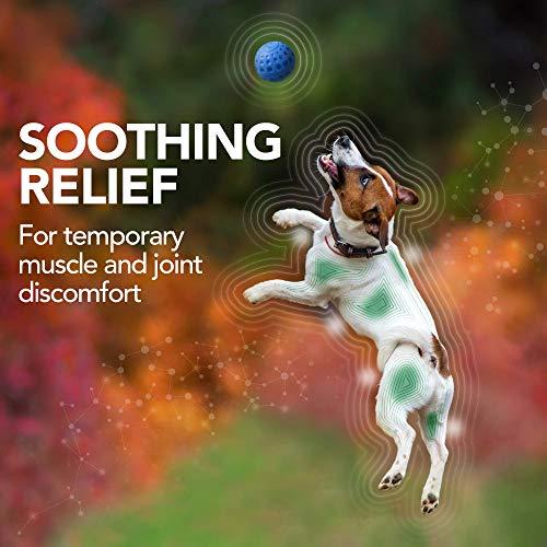 Vet's Aspirinfreies Nahrungsergänzungsmittel gegen Beschwerden und Schmerzen für Hunde, natürliche Formel