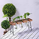 Zantec Modische transparente Glasvase mit Holz & Eisen Stand für Wasserpflanzen Dekoration Geschenk