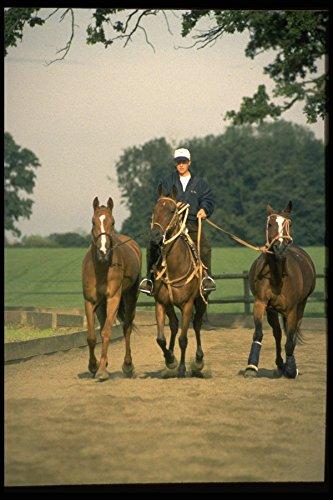 361074 Girl Groom Royal Berks Polo Club Exercising Ponies A4 Photo Poster Print 10x8 -