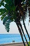 Fotografía de Palm Trees de 30,48 cm x 45,72 cm Impresión fotográfica de palmeras en Playa del Penoncillo Playa Torrox Costa Axarquia Andalucía Costa del Sol España retrato foto color impresión artística fina. Fotografía de Andy Evans