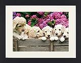 1art1 113631 Hunde - Labrador Welpen Im Garten Gerahmtes Poster Für Fans Und Sammler 40 x 30 cm