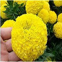 100pcs / bag del crisantemo Semillas multi-colores semillas de flor de alta germinación, las semillas de Bonsai jardín de granja verde